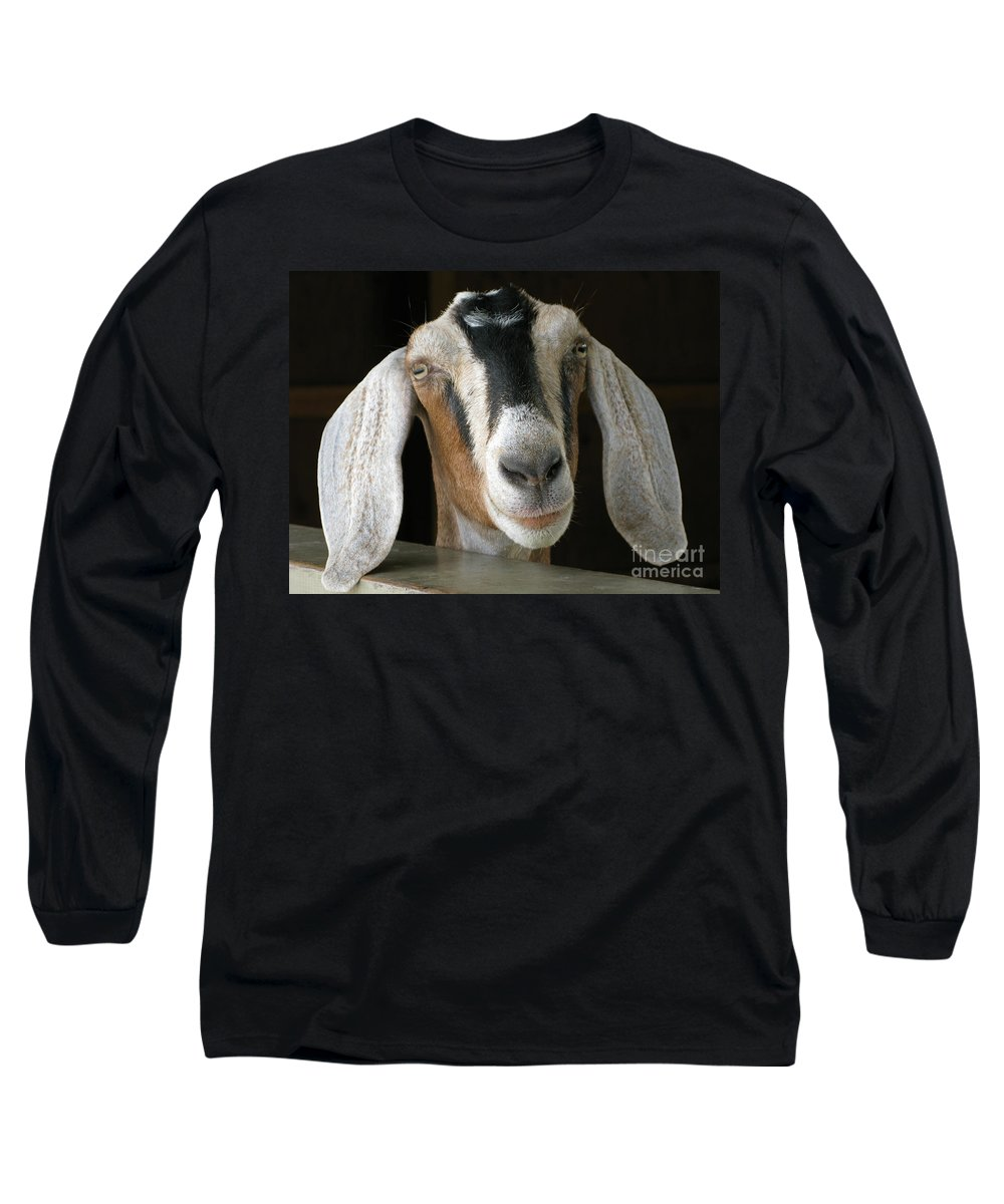 Goat Long Sleeve T-Shirt featuring the photograph Farm Favorite by Ann Horn