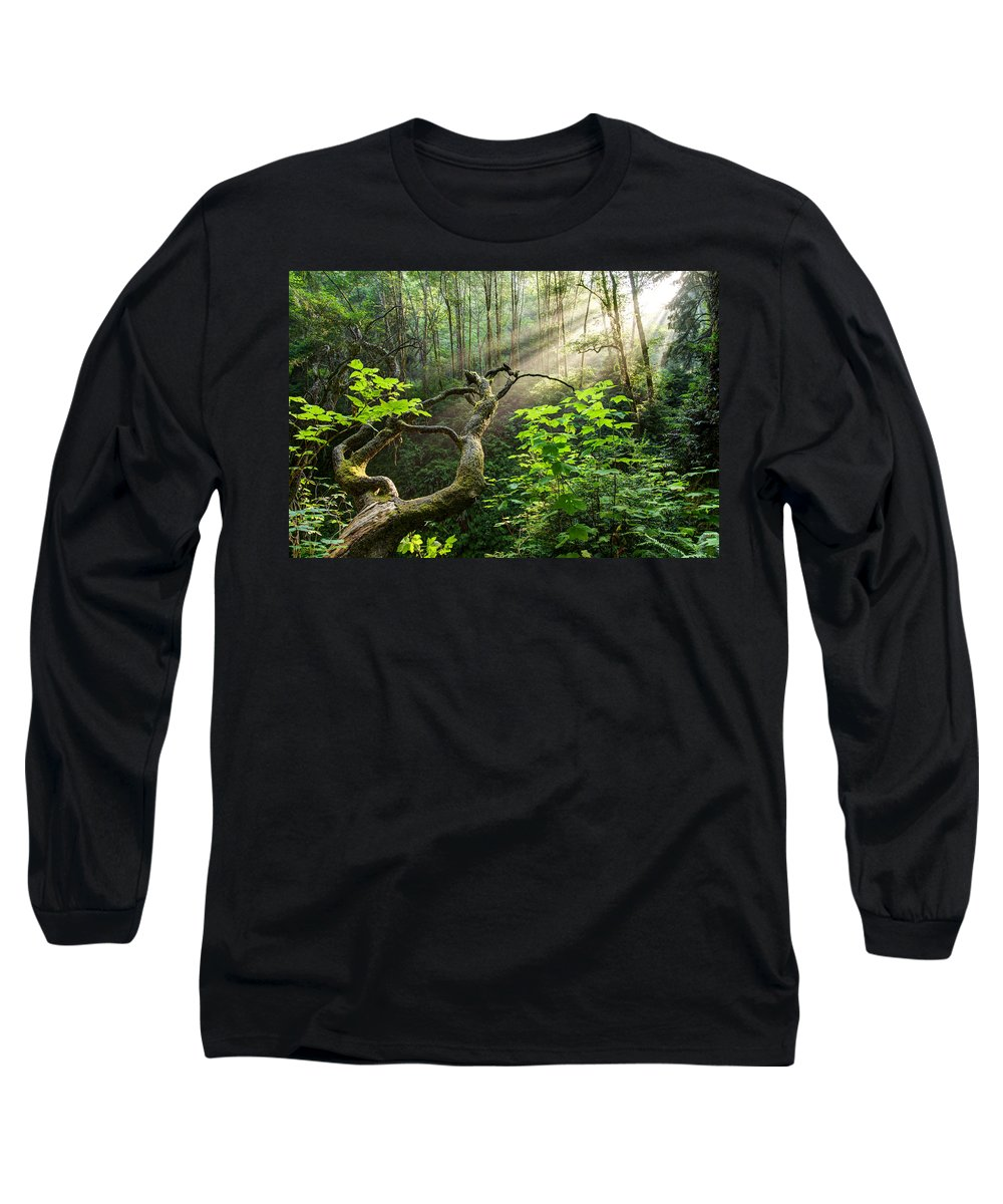 California Long Sleeve T-Shirt featuring the photograph Sacred Grove by Dustin LeFevre