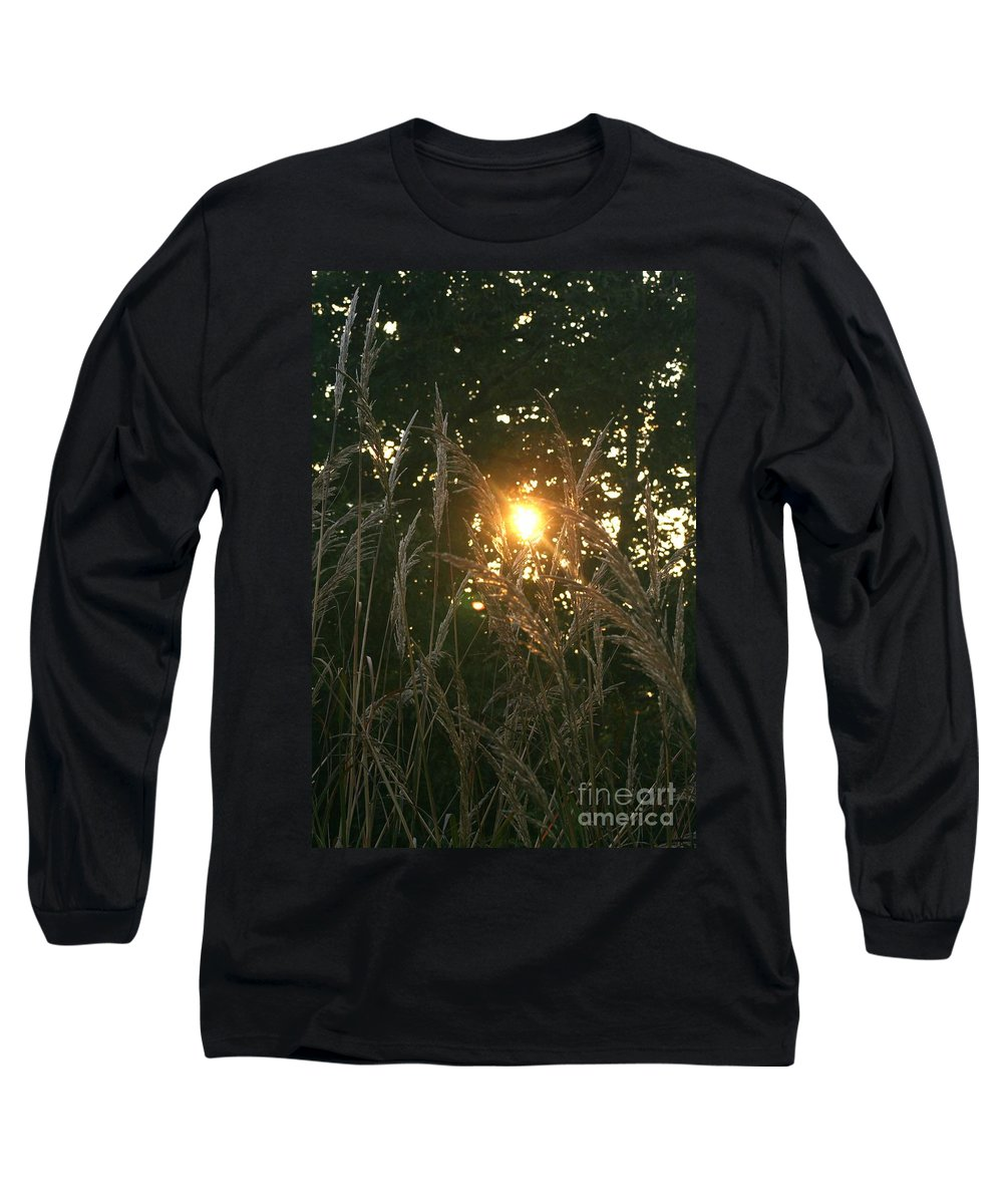 Light Long Sleeve T-Shirt featuring the photograph Autumn Grasses In The Morning by Nadine Rippelmeyer