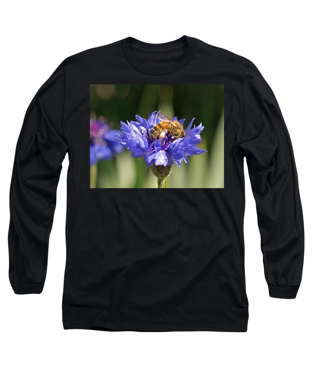 Bee. Flower Long Sleeve T-Shirt featuring the photograph Bachelor Button And Bee by Heather Coen