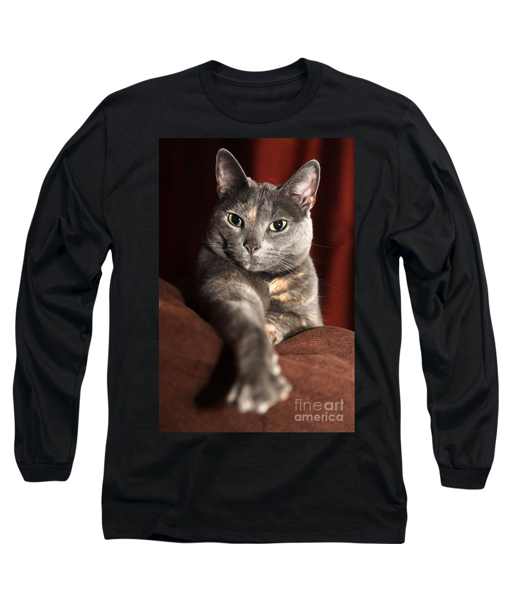 Kitty Long Sleeve T-Shirt featuring the photograph Come Here by Amanda Barcon