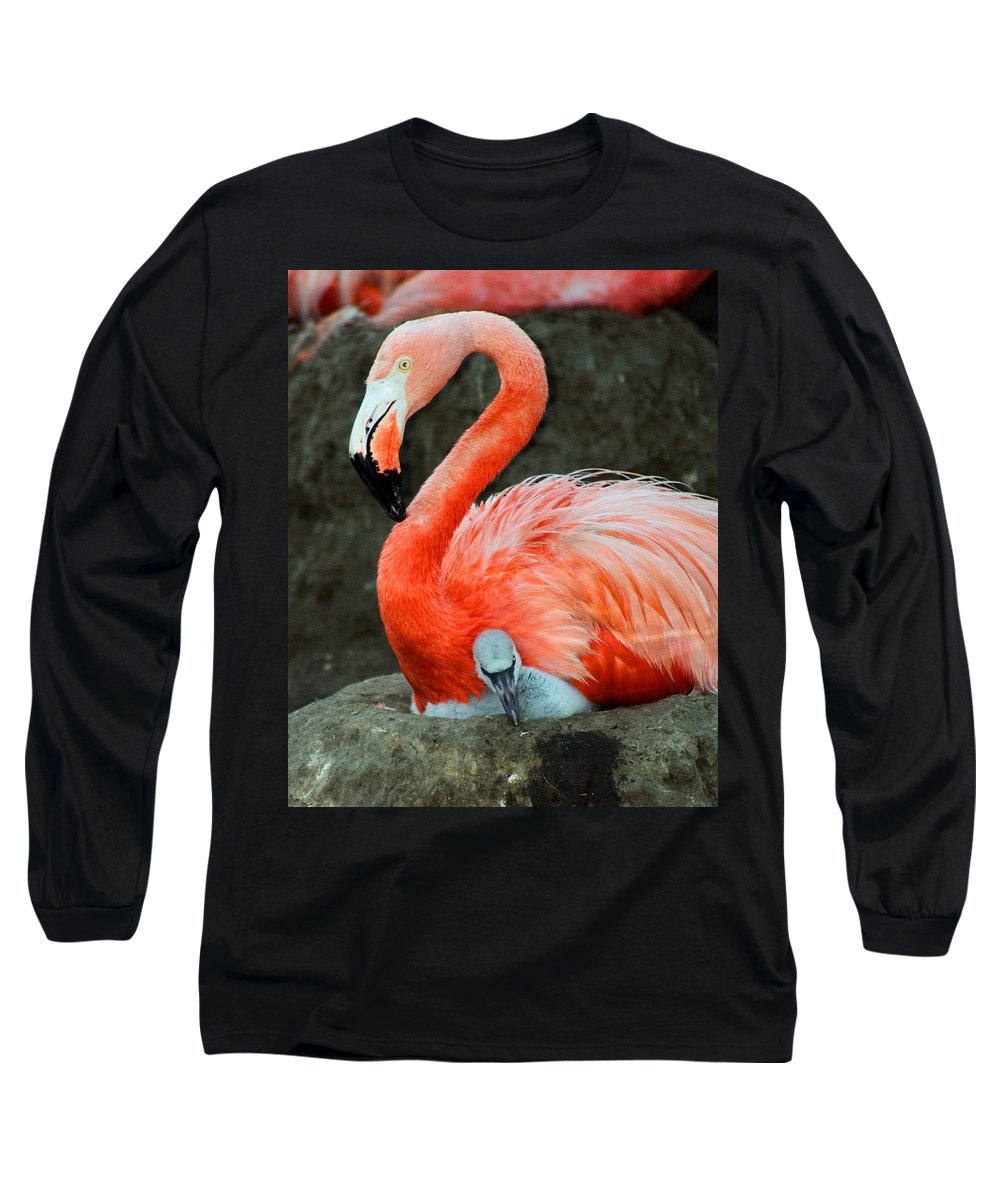 Bird Long Sleeve T-Shirt featuring the photograph Flamingo And Baby by Anthony Jones