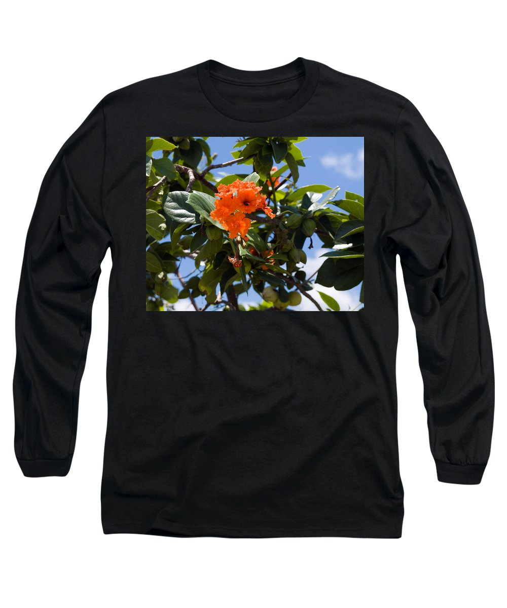 Hibiscus; Rosasinensis; Rosa; Sinensis; Rosa-sinensis; Tree; Bush; Shrub; Plant; Flower; Flowers; Fl Long Sleeve T-Shirt featuring the photograph Hibiscus Rosasinensis With Fruit On The Indian River by Allan Hughes