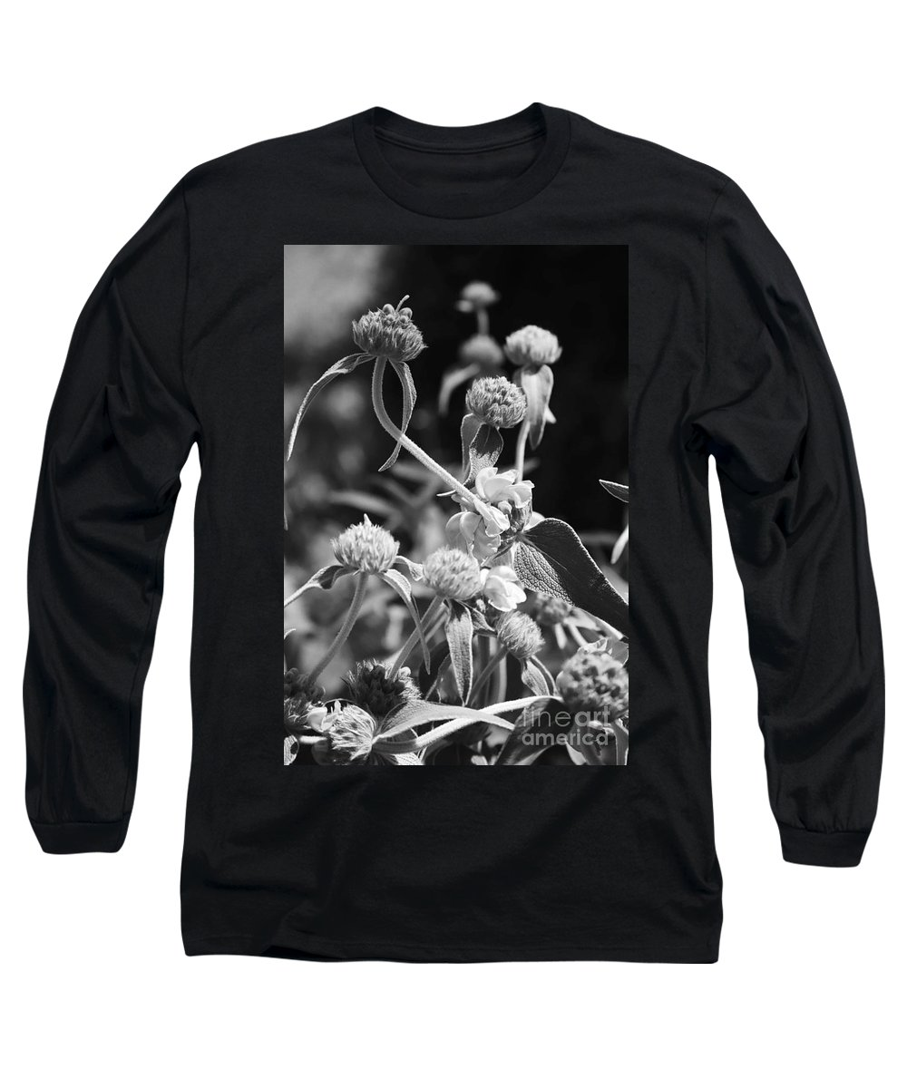 Herbs Long Sleeve T-Shirt featuring the photograph Jerusalem Sage by Kathy McClure
