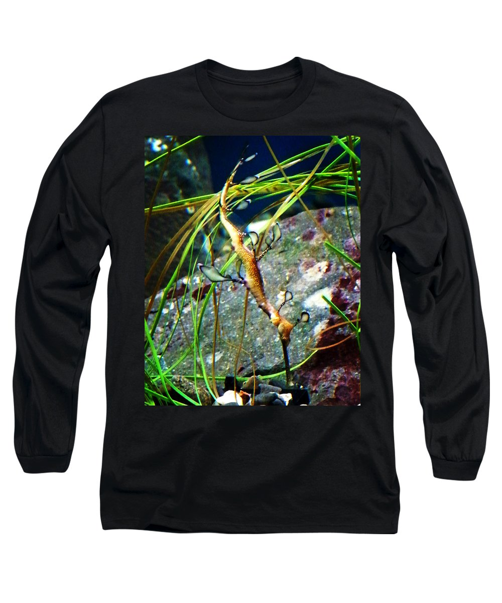 Paintings Long Sleeve T-Shirt featuring the photograph Leafy Sea Dragon by Anthony Jones