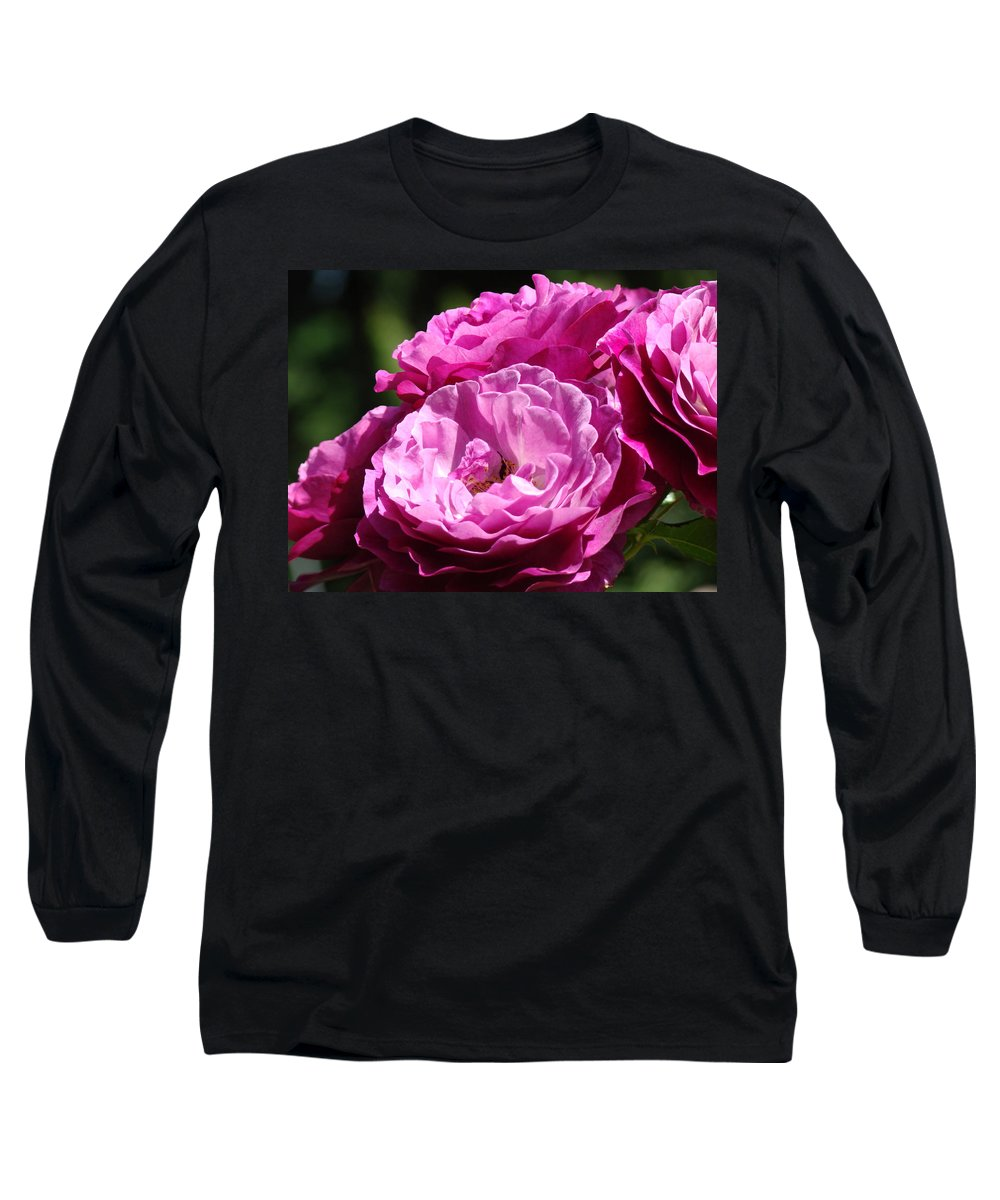 Rose Long Sleeve T-Shirt featuring the photograph Rose Pink Purple Roses Flowers 1 Rose Garden Sunlit Flowers Baslee Troutman by Baslee Troutman