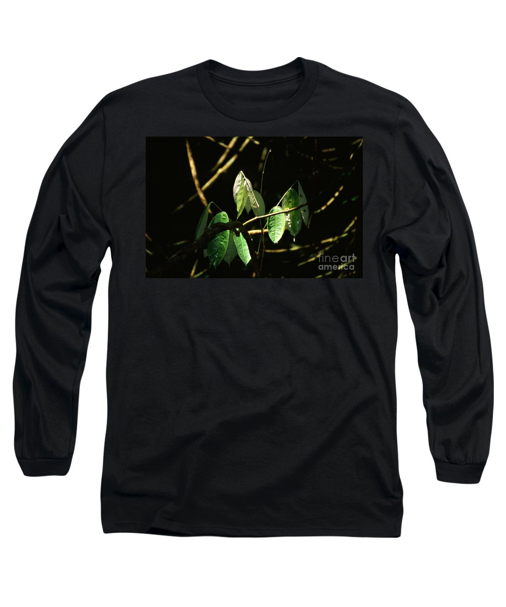 Leaves Long Sleeve T-Shirt featuring the photograph Sunlit Leaves by Kathy McClure