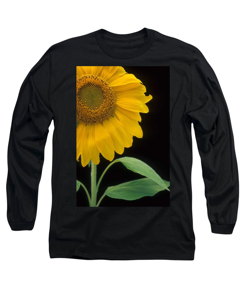 Sunflower Long Sleeve T-Shirt featuring the photograph Sussex County Gem by Laurie Paci