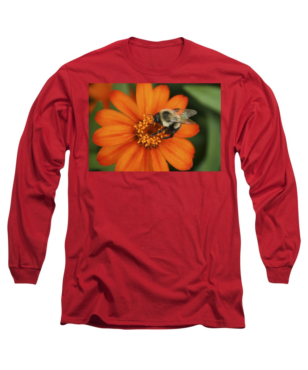 Bee Long Sleeve T-Shirt featuring the photograph Bee On Aster by Margie Wildblood