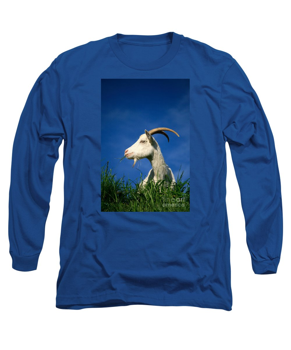 Animals Long Sleeve T-Shirt featuring the photograph Goat by Gaspar Avila