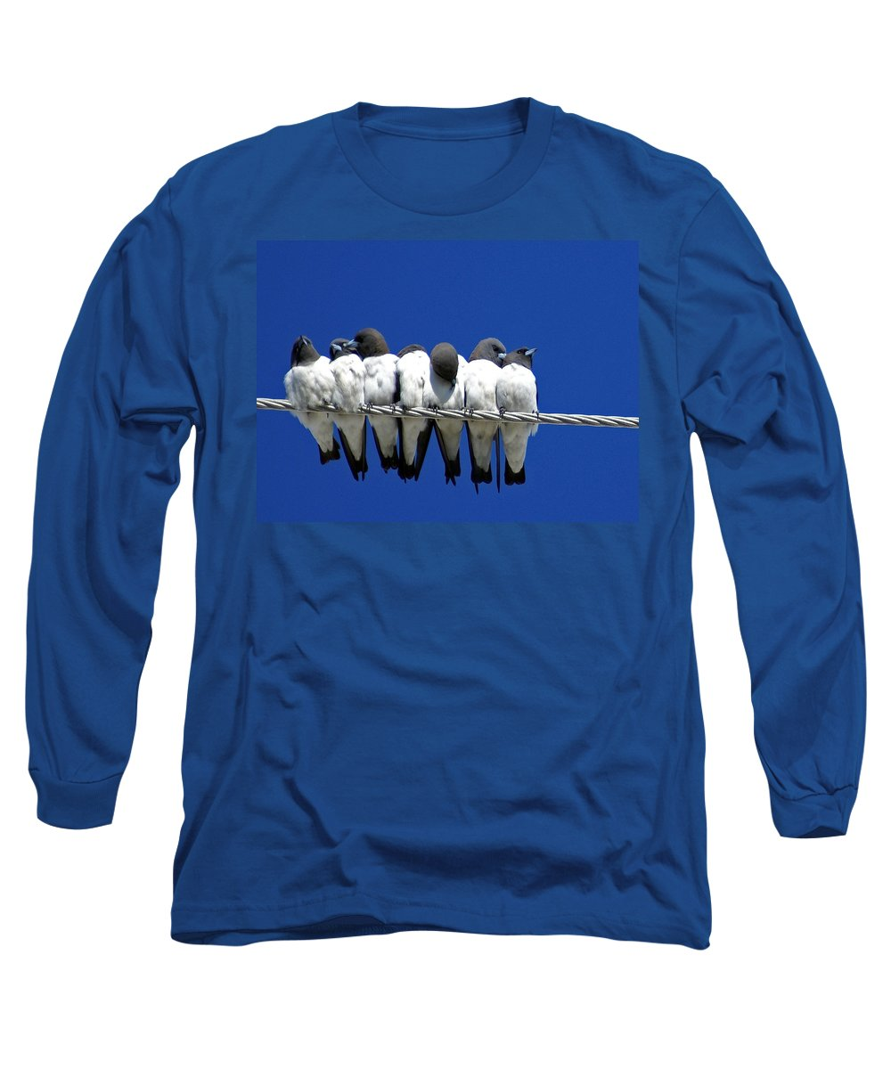 Animals Long Sleeve T-Shirt featuring the photograph Seven Swallows Sitting by Holly Kempe