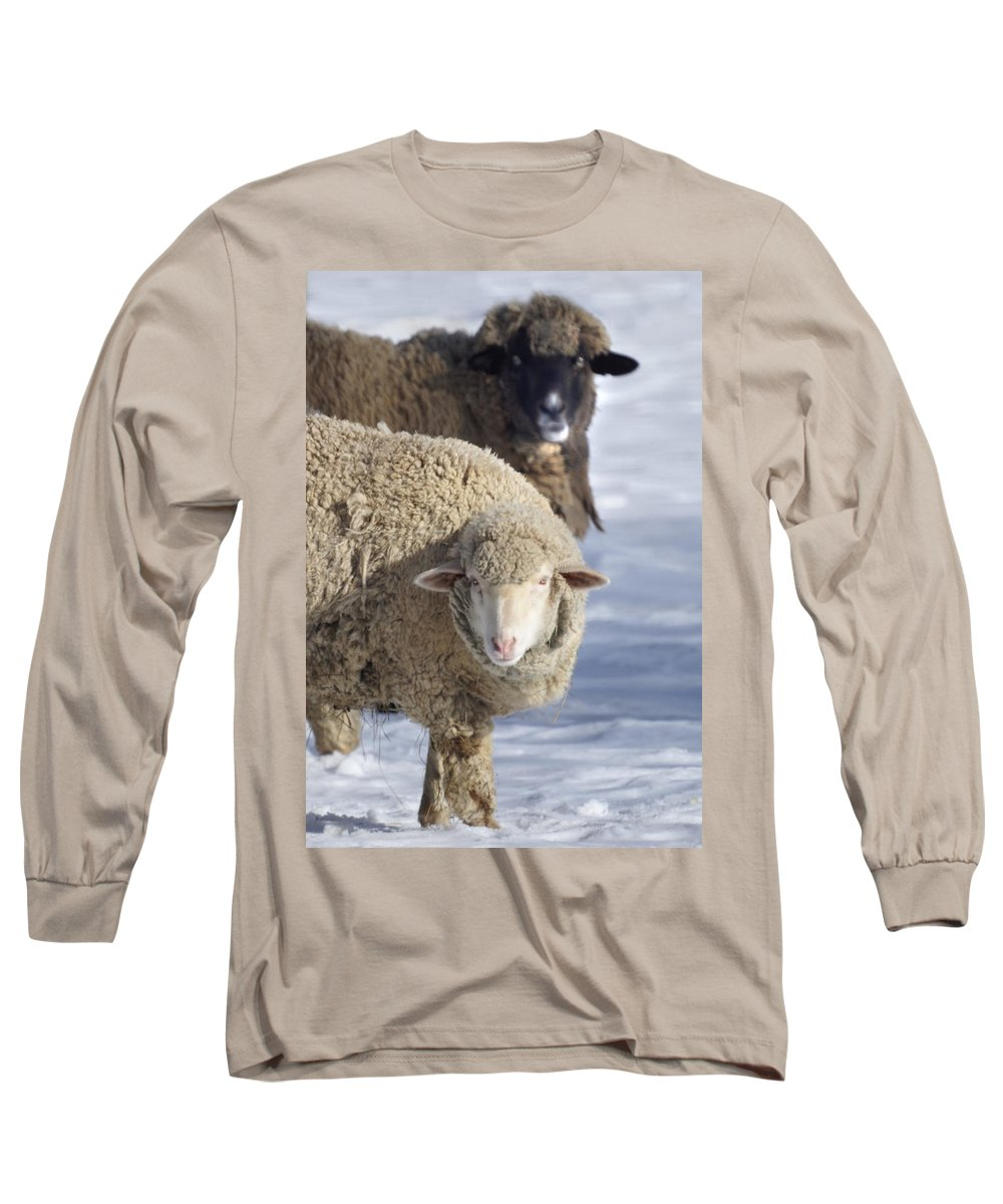 Sheep Long Sleeve T-Shirt featuring the photograph Black And White by Heather Coen