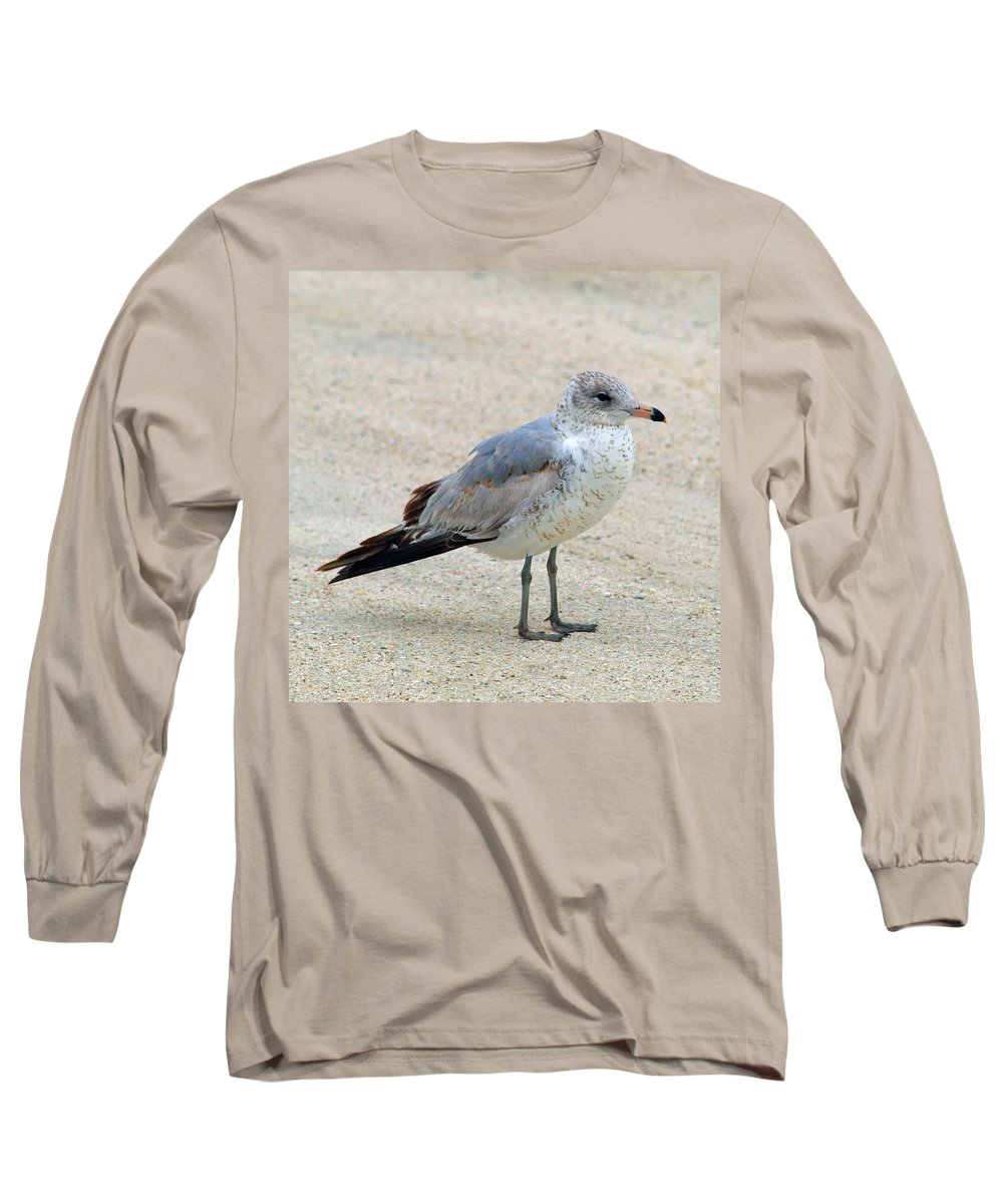 Laughing; Gull; Seagull; Bird; Waterfowl; Seashore; Sebastian; Inlet; Flying; Florida; Larus; Atrici Long Sleeve T-Shirt featuring the photograph Laughing Gull by Allan Hughes