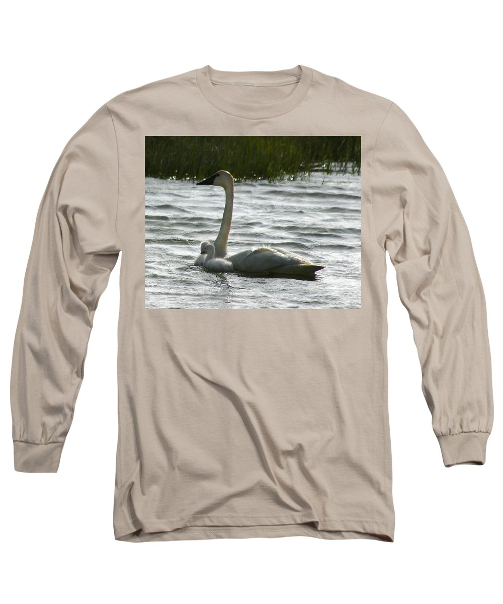 Swans Long Sleeve T-Shirt featuring the photograph Tundra Swan And Signets by Anthony Jones