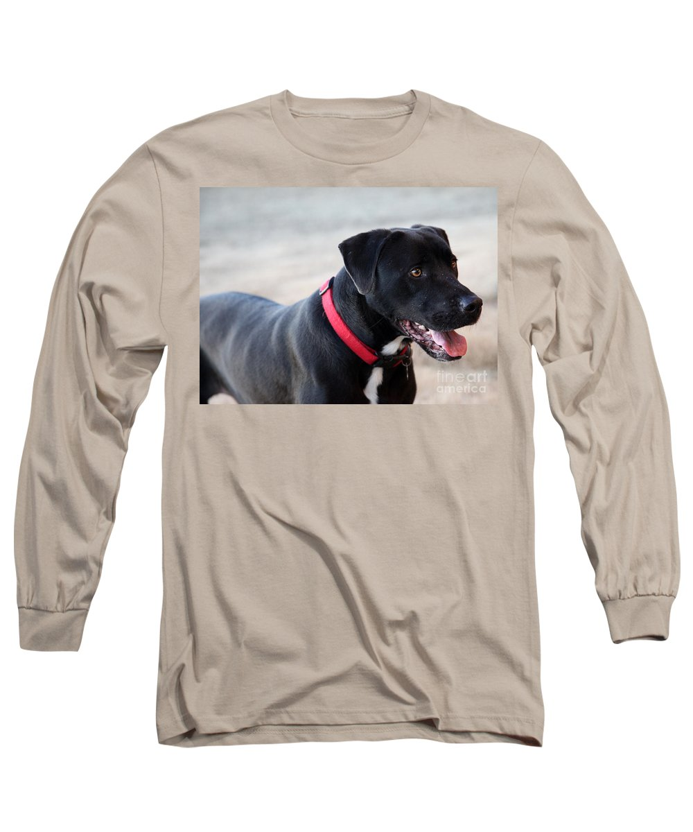 Dogs Long Sleeve T-Shirt featuring the photograph Yes I Want To Play by Amanda Barcon