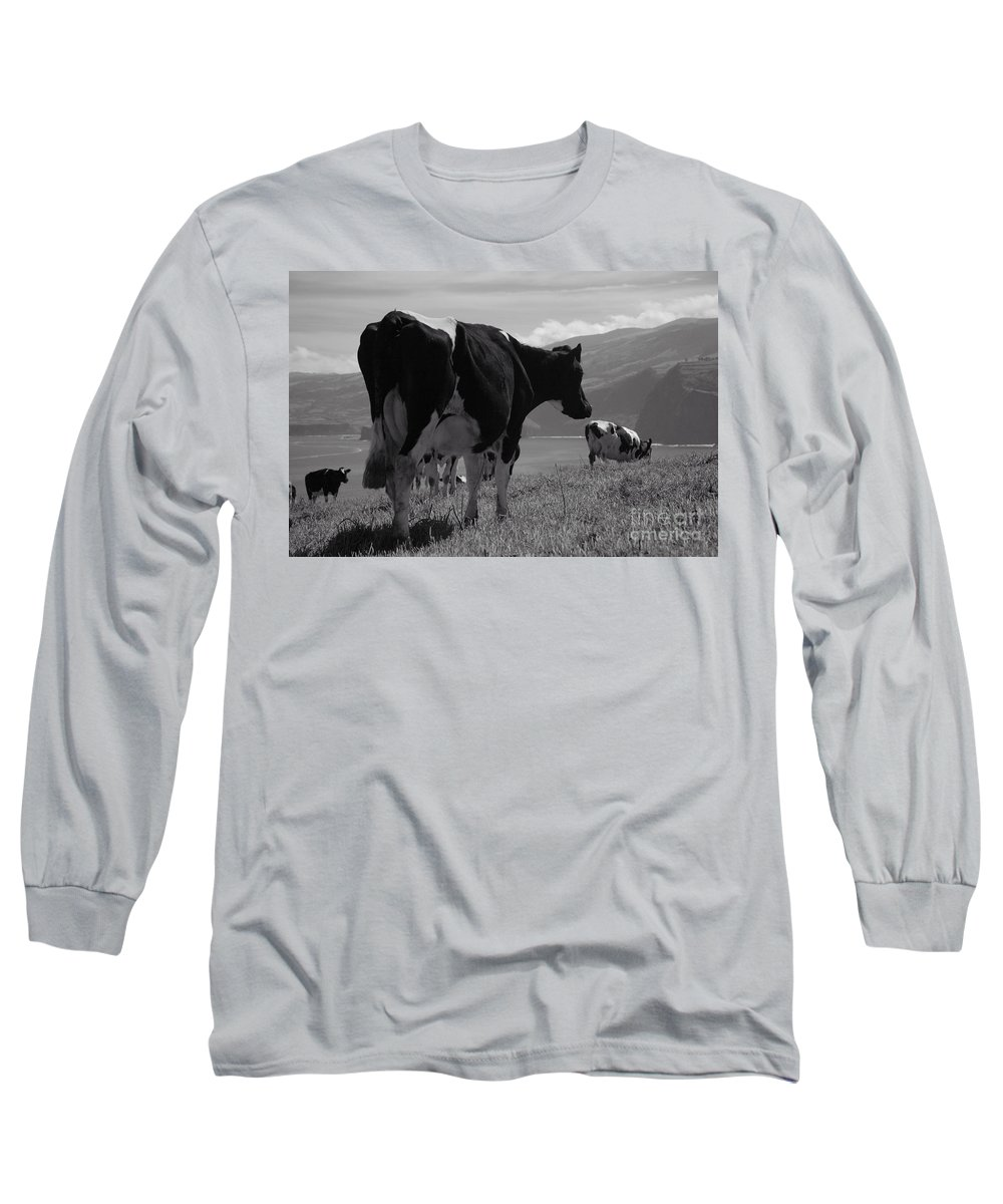 Azoren Long Sleeve T-Shirt featuring the photograph Cows by Gaspar Avila