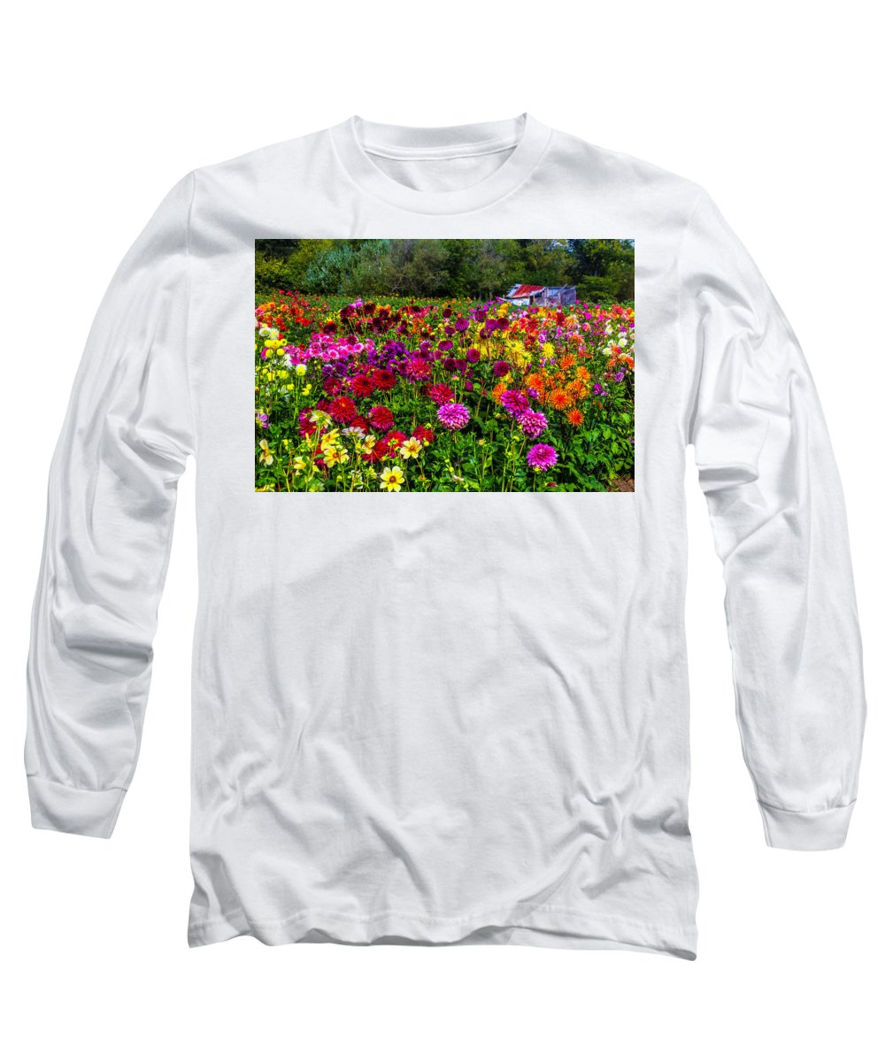 Dahlia Long Sleeve T-Shirt featuring the photograph Colorful Dahlias In Garden by Garry Gay