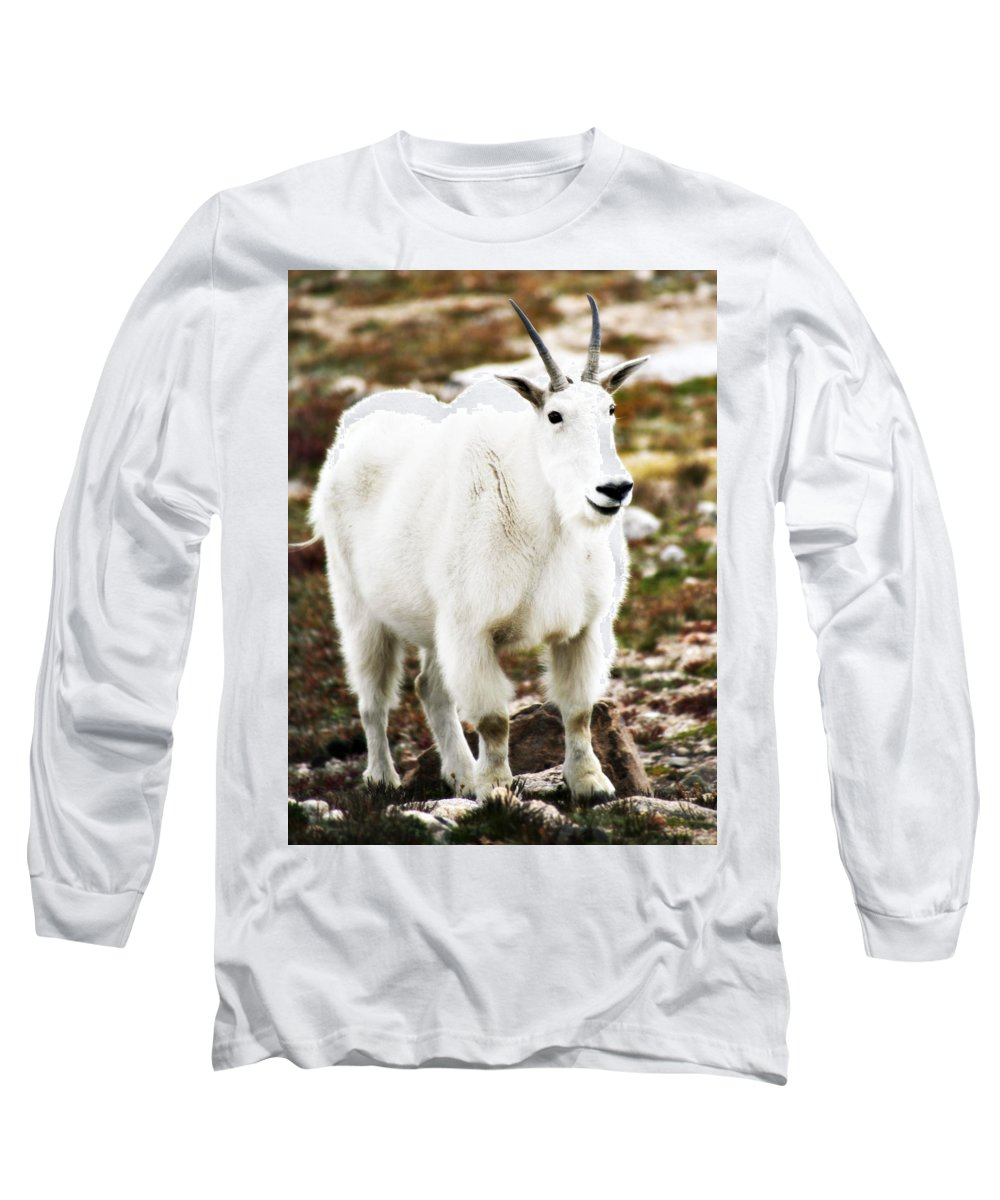 Animal Long Sleeve T-Shirt featuring the photograph Mountain Goat by Marilyn Hunt