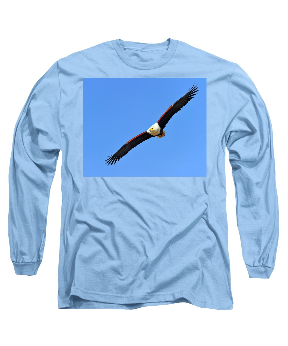 Designs Similar to African Fish Eagle by Tony Beck