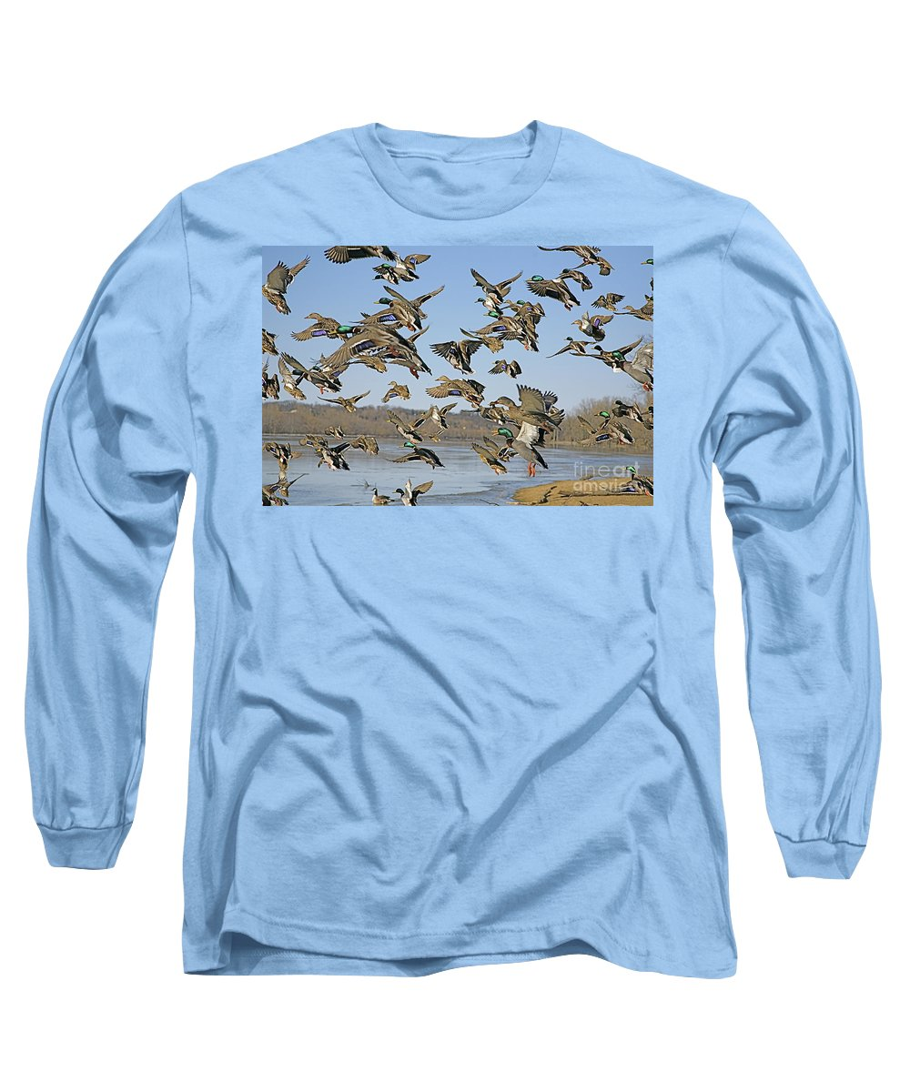 Nature Feather Long Sleeve T-Shirt featuring the photograph Mad Rush by Robert Pearson