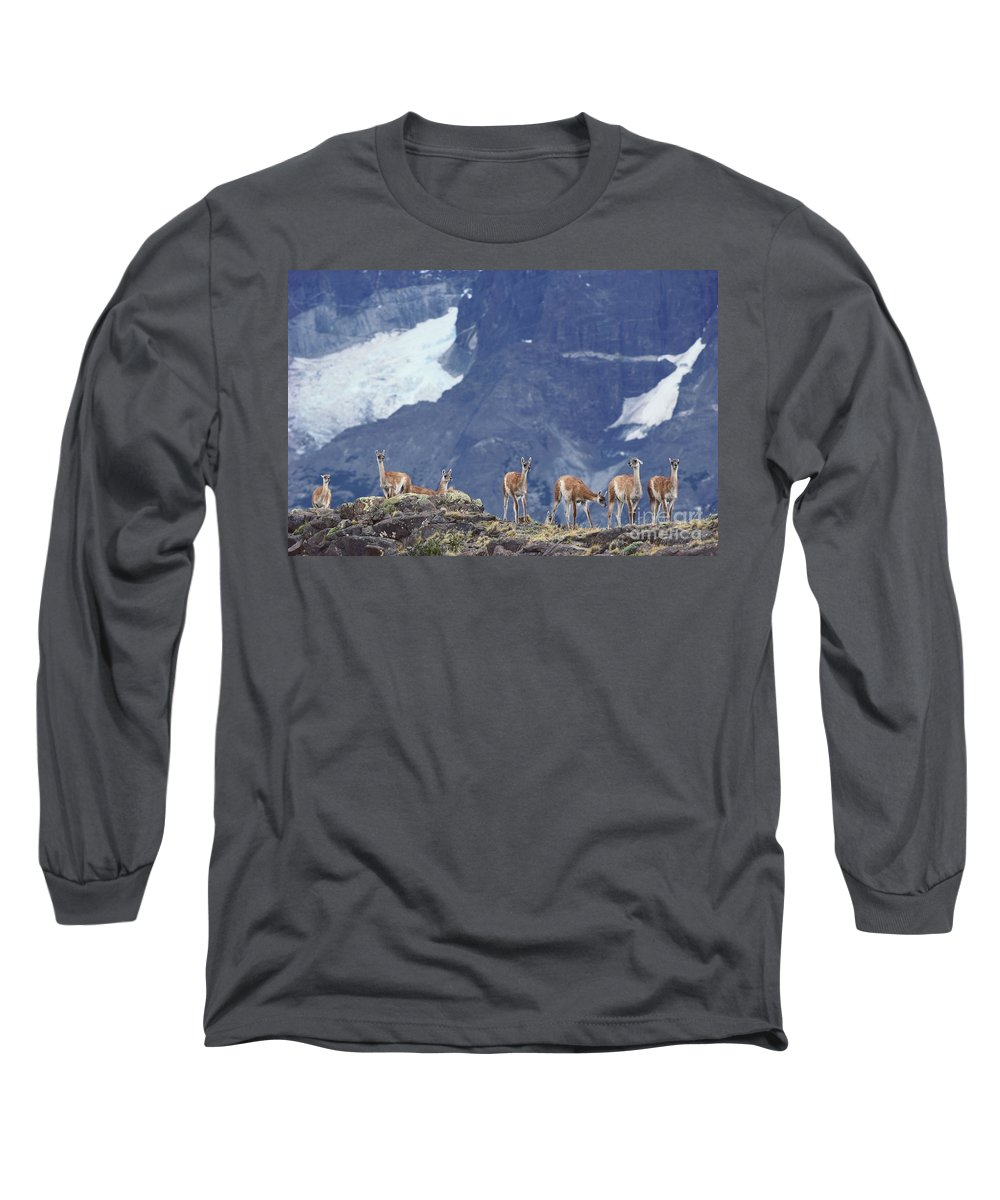 Outdoors Long Sleeve T-Shirt featuring the photograph Guanaco 1 by Art Wolfe