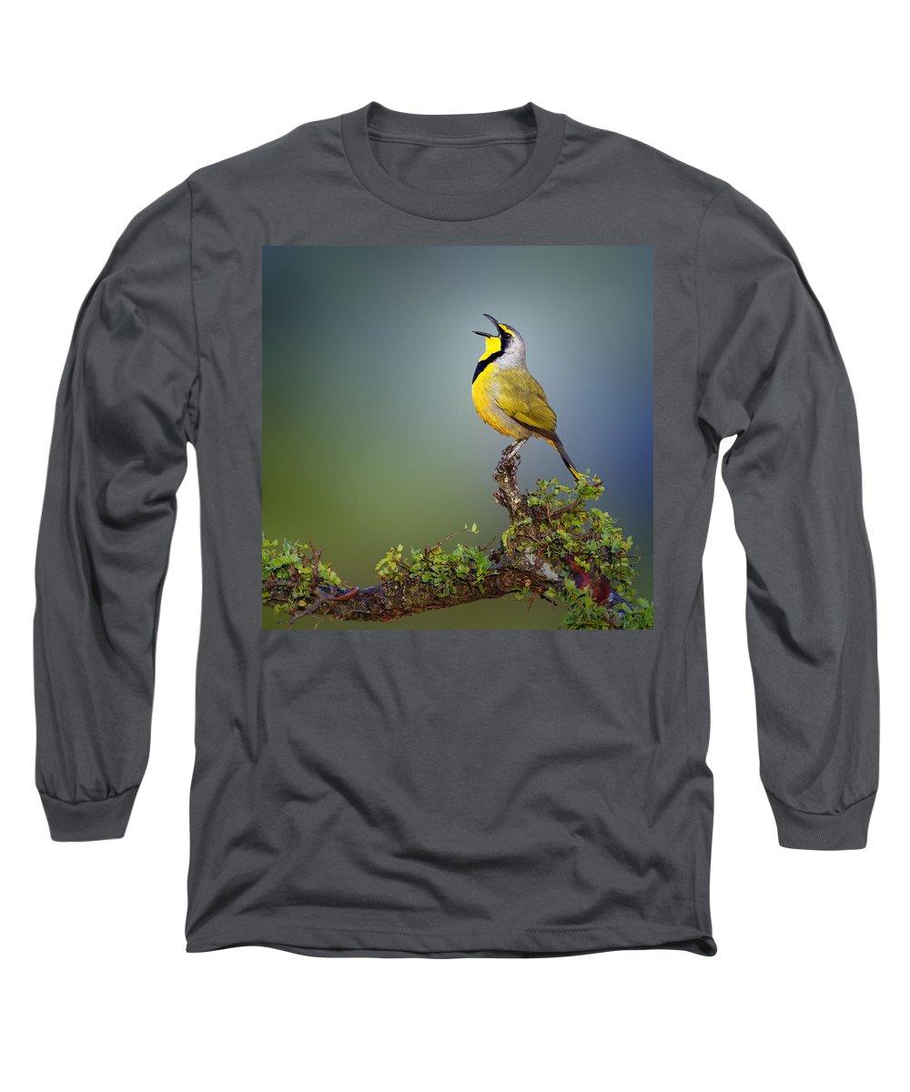Bokmakierie Long Sleeve T-Shirt featuring the photograph Bokmakierie Bird - Telophorus Zeylonus by Johan Swanepoel