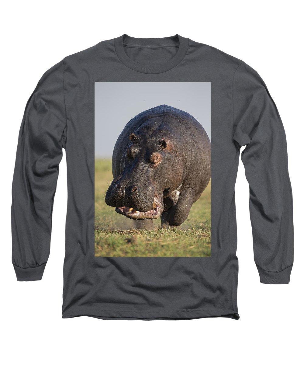 Vincent Grafhorst Long Sleeve T-Shirt featuring the photograph Hippopotamus Bull Charging Botswana by Vincent Grafhorst