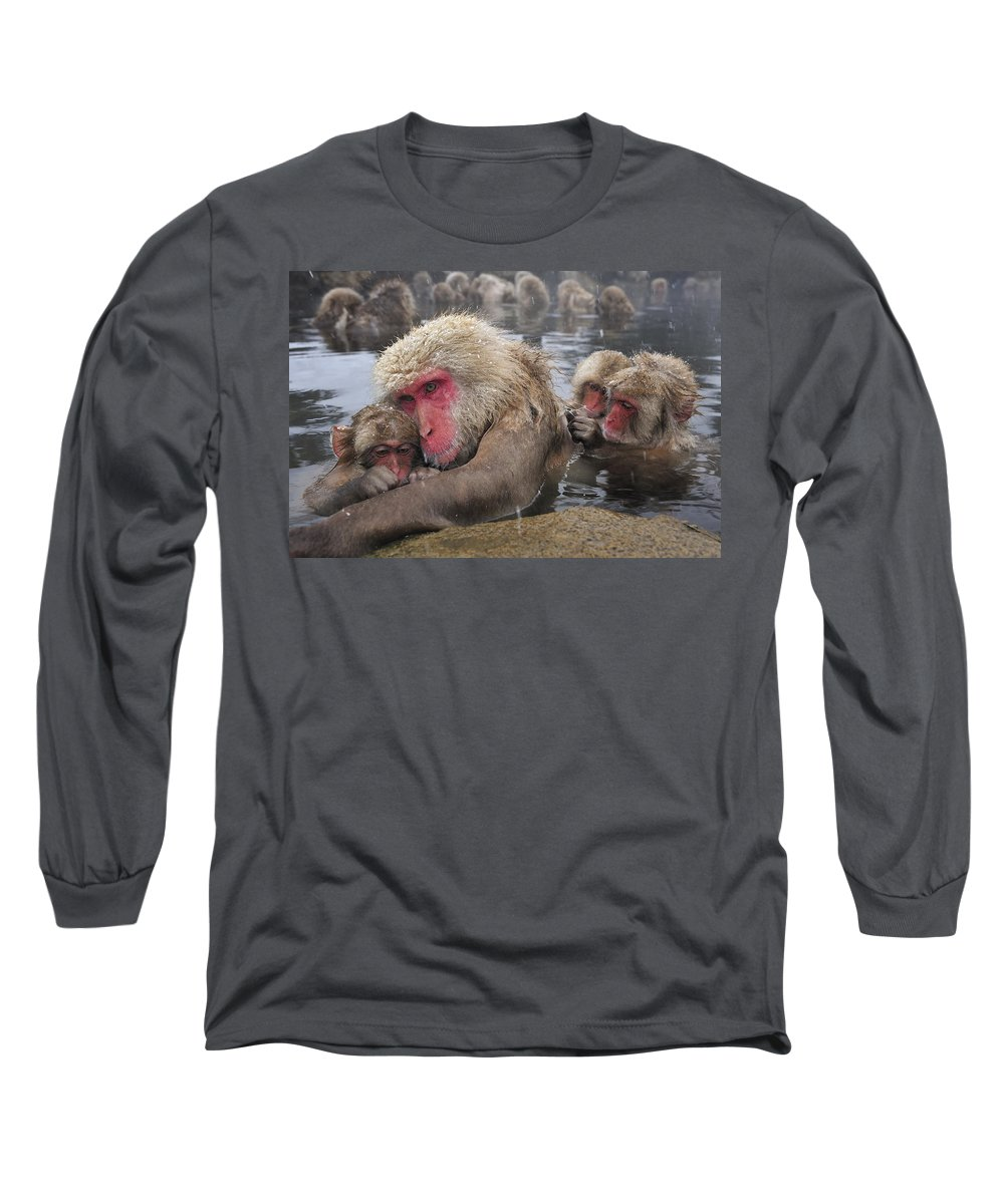 Thomas Marent Long Sleeve T-Shirt featuring the photograph Japanese Macaque Grooming Mother by Thomas Marent