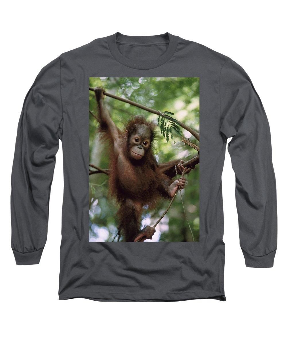 Feb0514 Long Sleeve T-Shirt featuring the photograph Orangutan Infant Hanging Borneo by Konrad Wothe