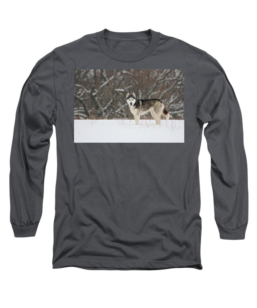Landscape Long Sleeve T-Shirt featuring the photograph Siberian Husky 20 by David Dunham