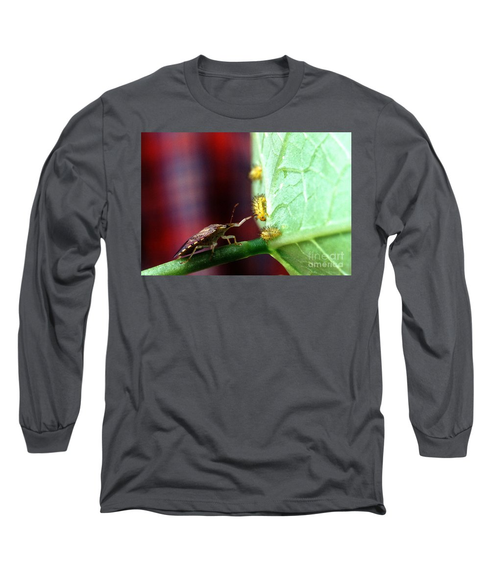 Mexican Bean Beetle Long Sleeve T-Shirts