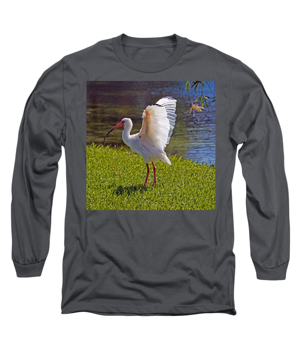 Ibis; White; Bird; Florida; Frog; Pollywogs; Pond; Seabird; Shore; Coast; Water; Fowl; Waterfowl; Fe Long Sleeve T-Shirt featuring the photograph White Ibis by Allan Hughes