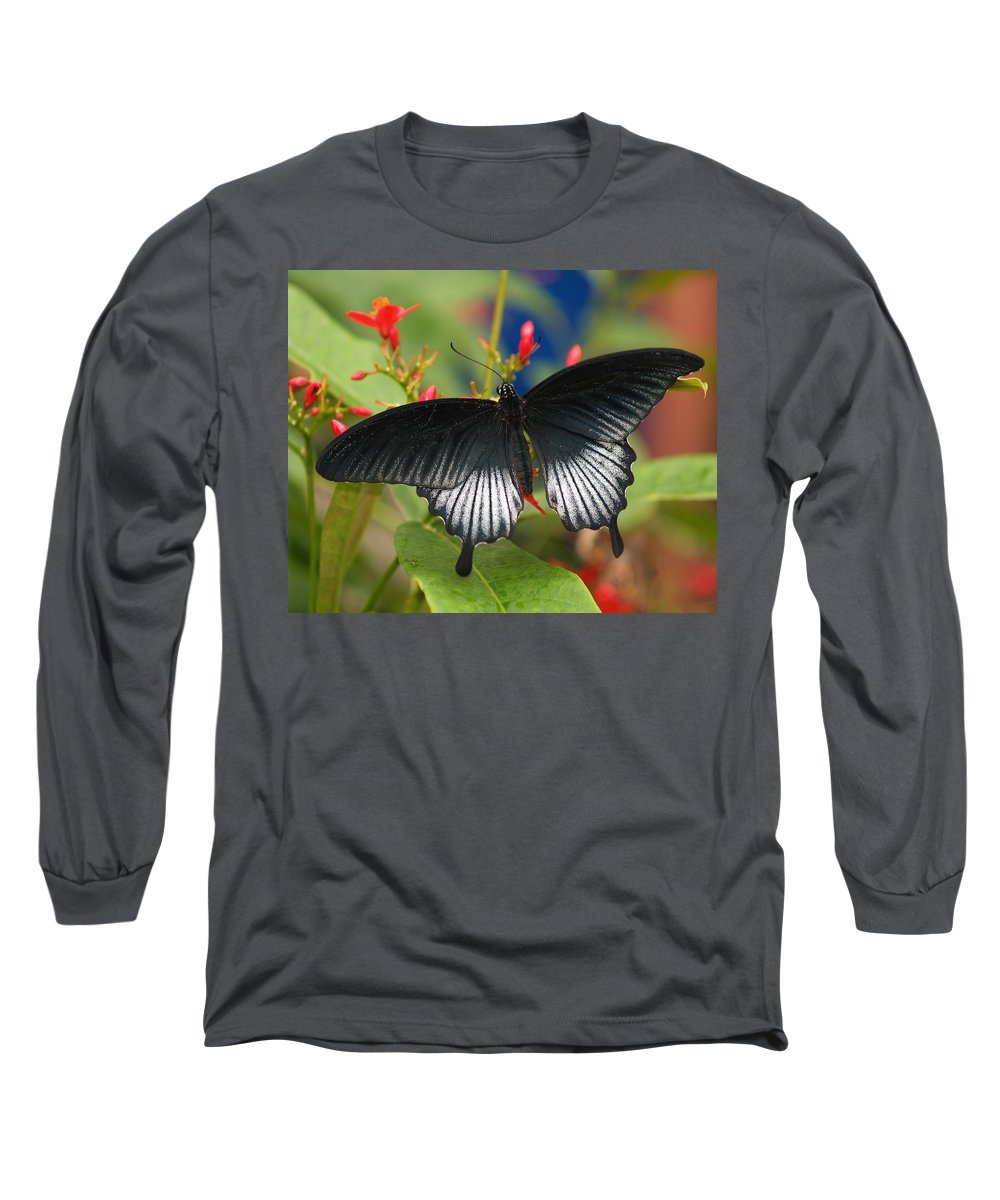 Butterfly Long Sleeve T-Shirt featuring the photograph Black Beauty by Gaby Swanson