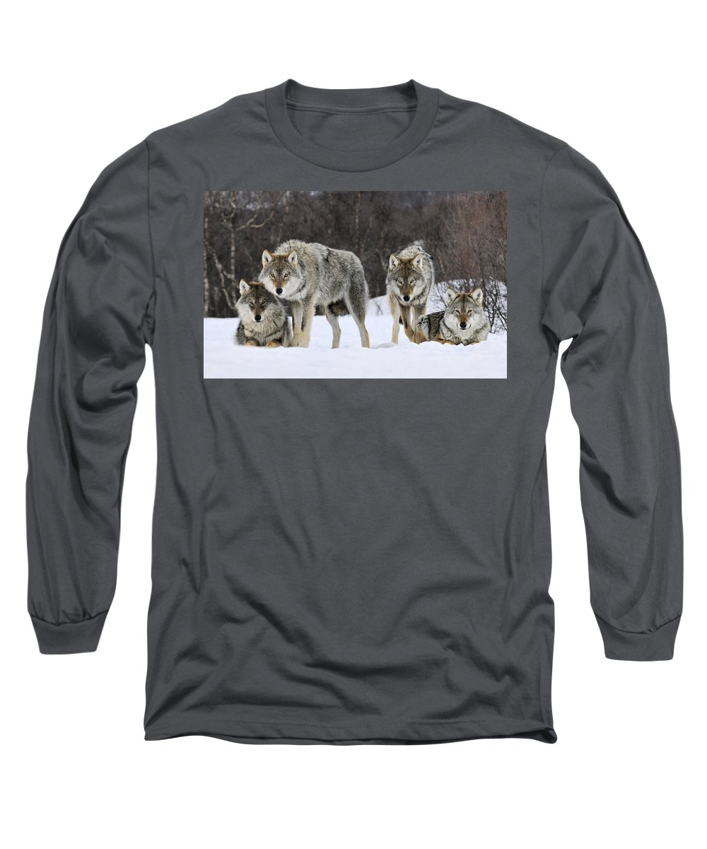 00436589 Long Sleeve T-Shirt featuring the photograph Gray Wolves Norway by Jasper Doest