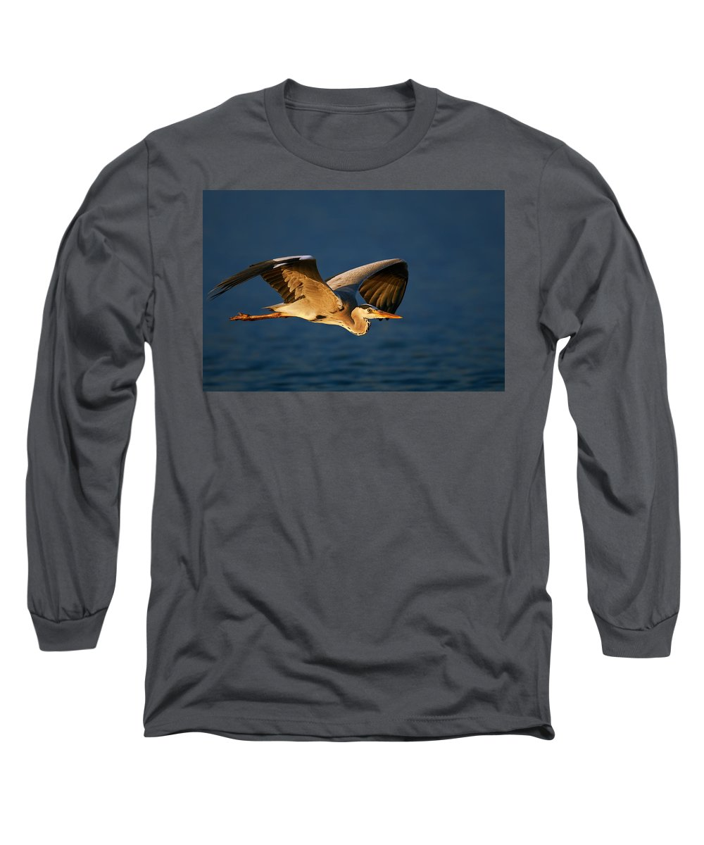Heron Long Sleeve T-Shirt featuring the photograph Grey Heron In Flight by Johan Swanepoel