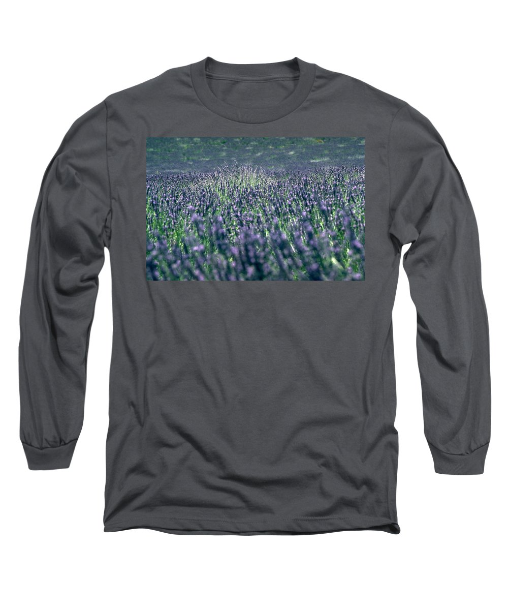 Lavender Long Sleeve T-Shirt featuring the photograph Lavender by Flavia Westerwelle
