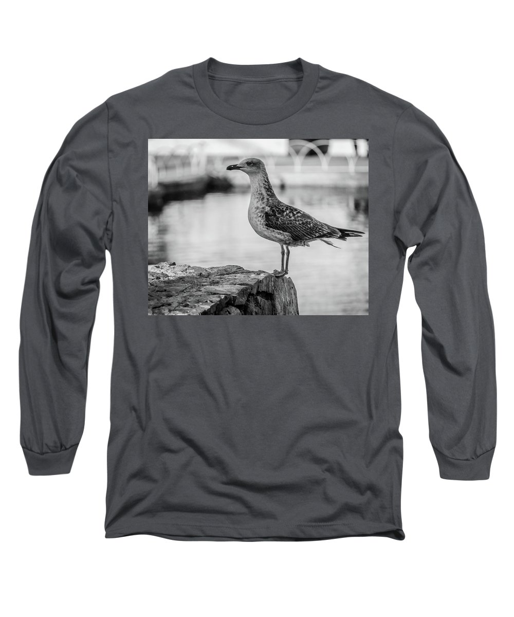 Seagull Long Sleeve T-Shirt featuring the photograph Young Seagull by Borja Robles