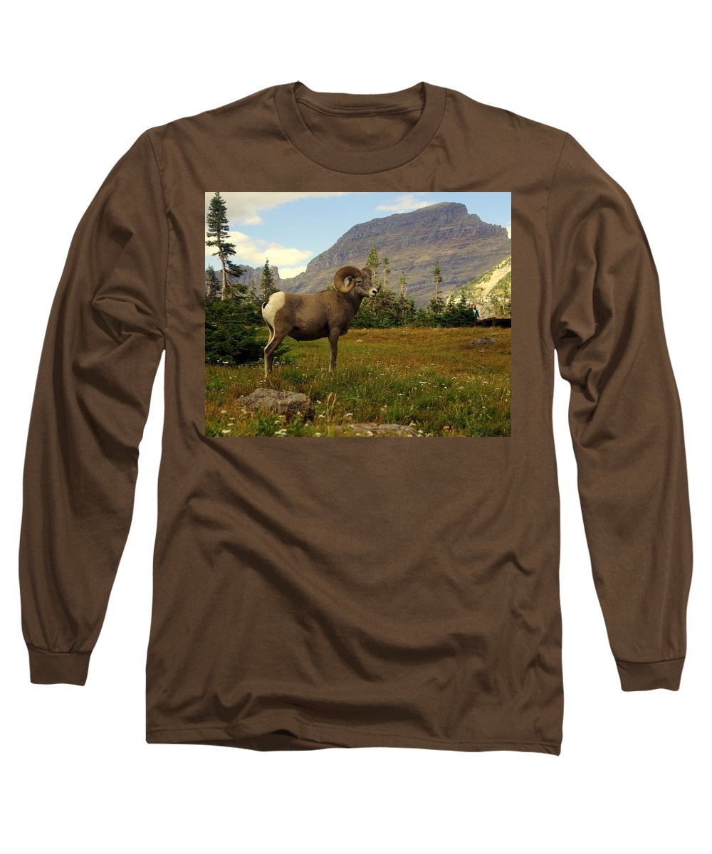 Big Horn Sheep Long Sleeve T-Shirt featuring the photograph Master Of His Domain by Marty Koch