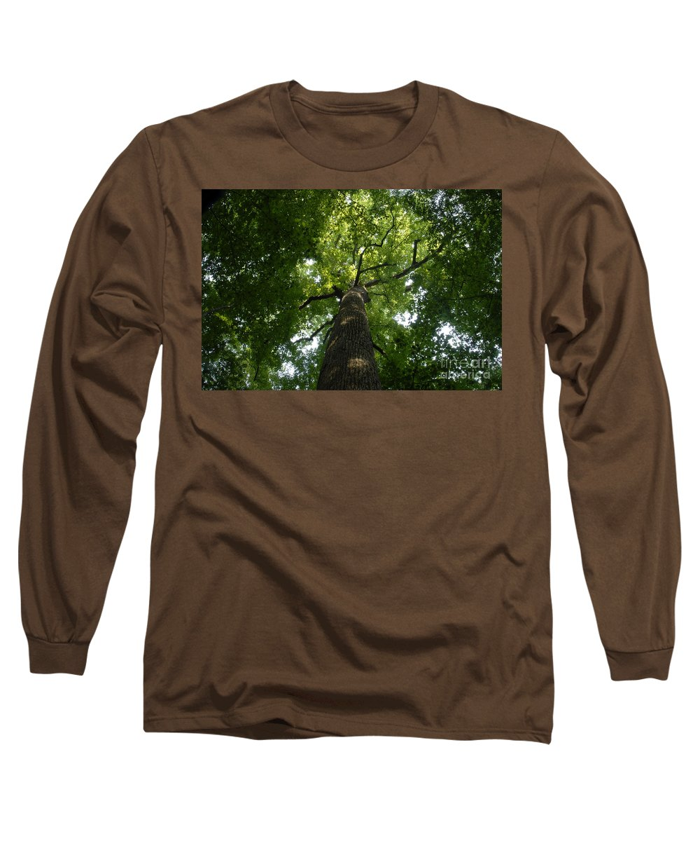 Joyce Kilmer Memorial Forest Long Sleeve T-Shirt featuring the photograph Virgin Canopy by David Lee Thompson