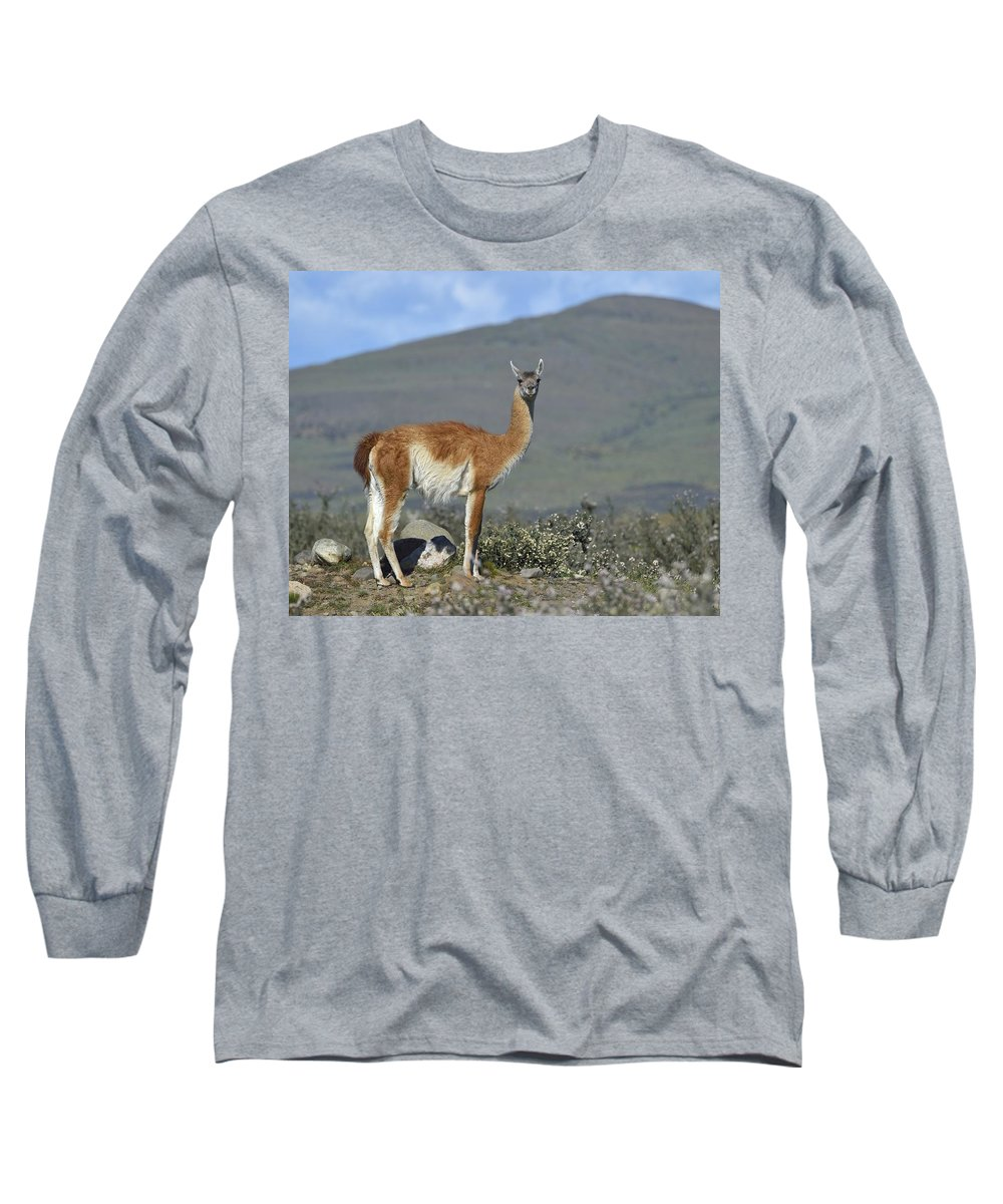 Guanaco Long Sleeve T-Shirt featuring the photograph Enjoy The Scenery by Tony Beck