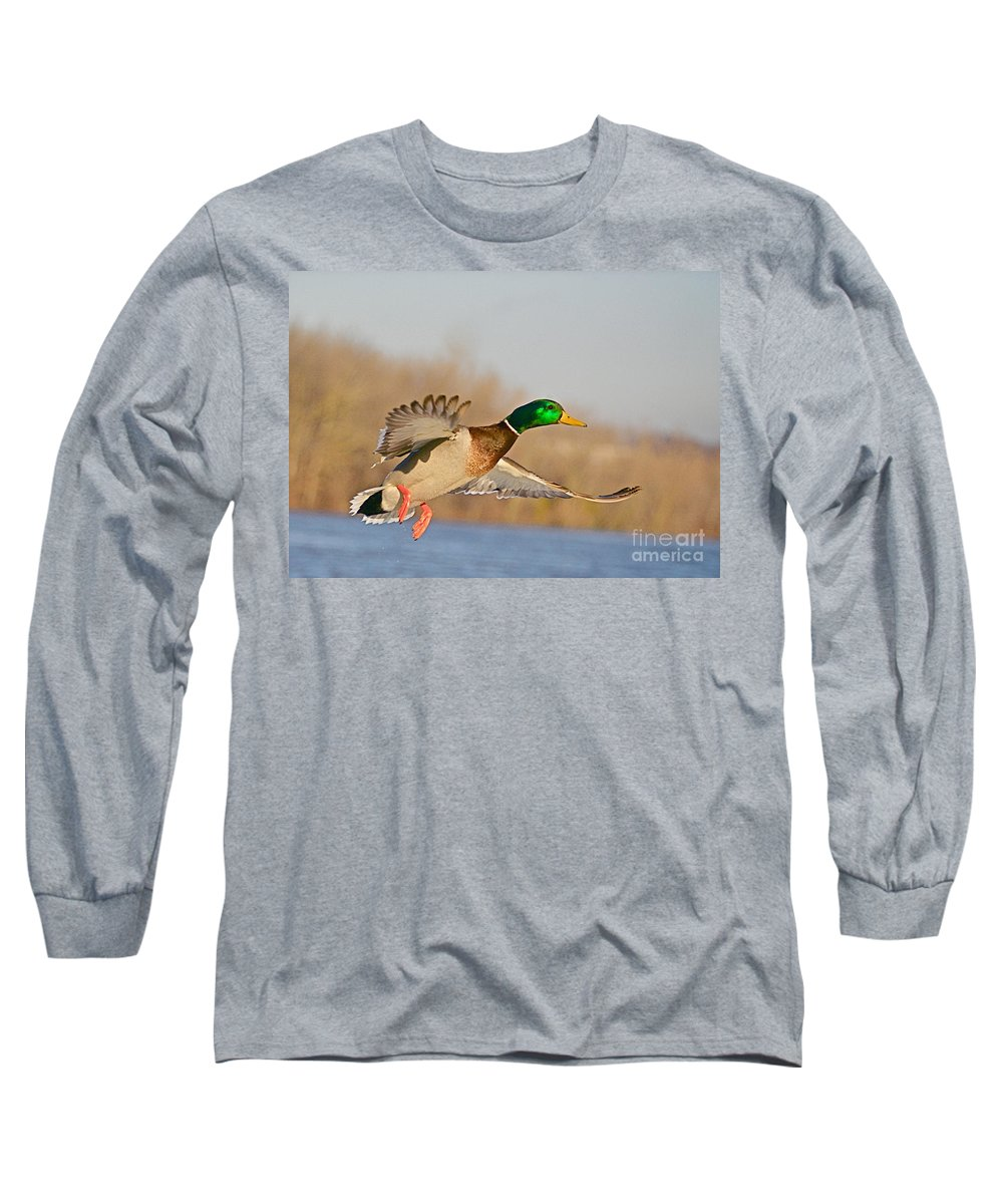 Mallard Long Sleeve T-Shirt featuring the photograph Fly By by Robert Pearson