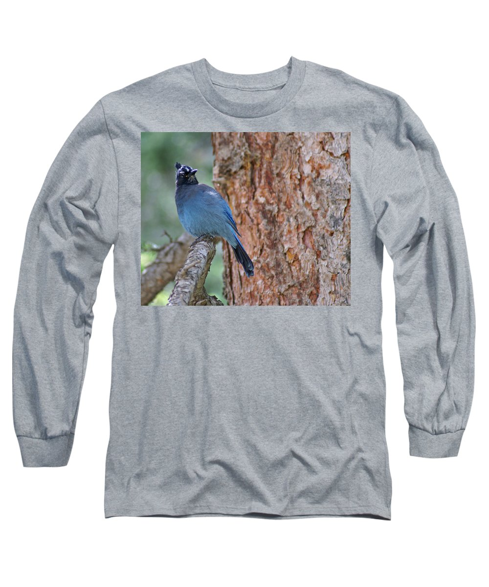 Blue Jay Long Sleeve T-Shirt featuring the photograph Blue Jay by Heather Coen