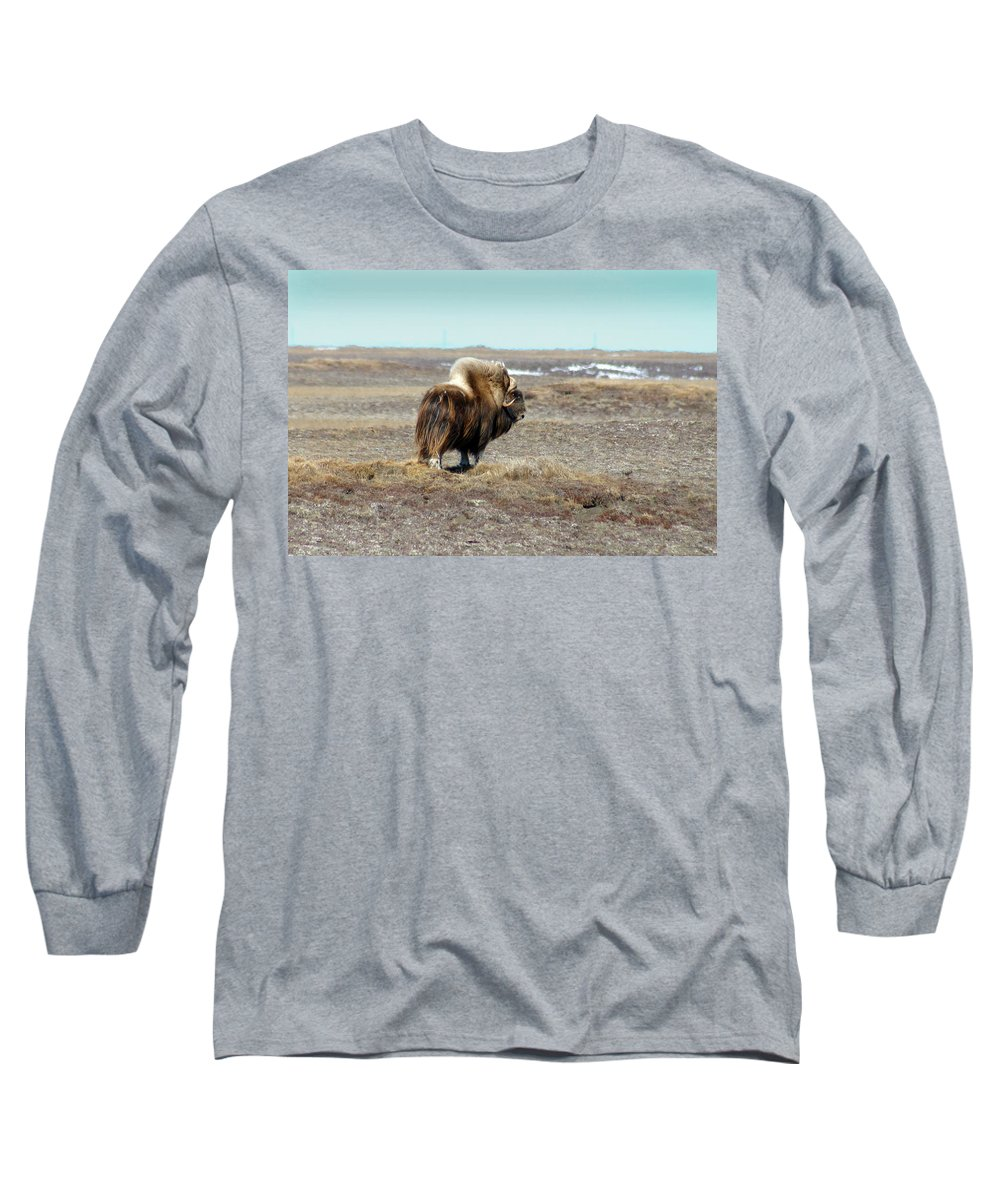 Bull Long Sleeve T-Shirt featuring the photograph Bull Musk Ox by Anthony Jones
