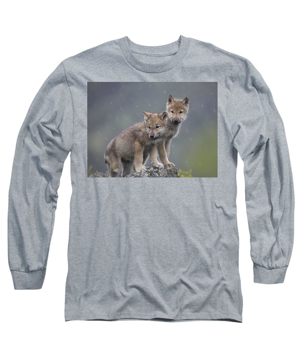 Mp Long Sleeve T-Shirt featuring the photograph Gray Wolf Canis Lupus Pups In Light by Tim Fitzharris