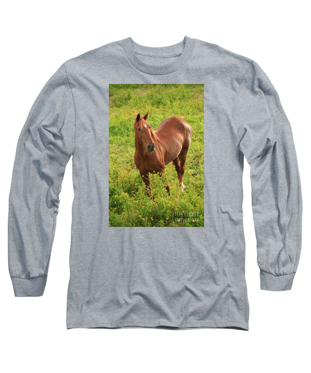 Animals Long Sleeve T-Shirt featuring the photograph Horse In A Field With Flowers by Gaspar Avila