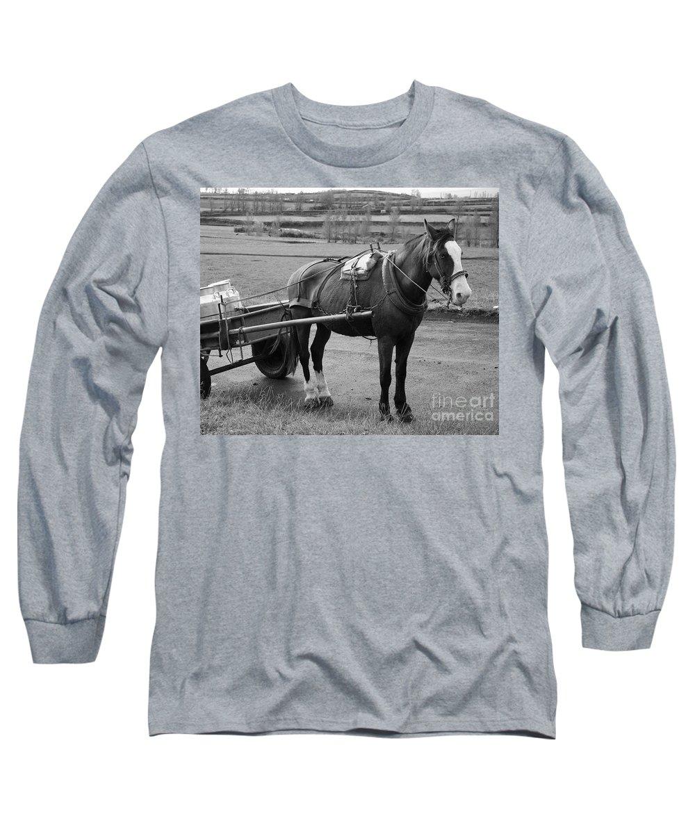 Cart Long Sleeve T-Shirt featuring the photograph Work Horse And Cart by Gaspar Avila