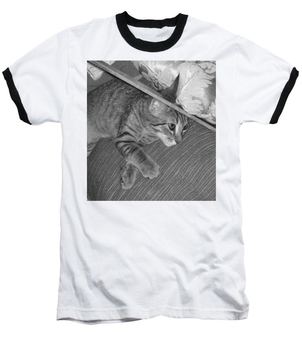 Kitten Baseball T-Shirt featuring the photograph Model Kitten by Pharris Art