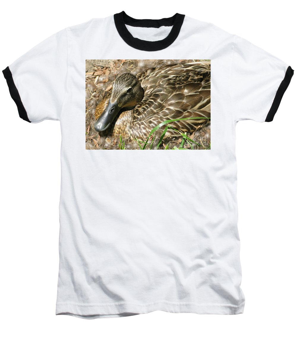 Mallard Baseball T-Shirt featuring the photograph Nesting Mallard by Ann Horn