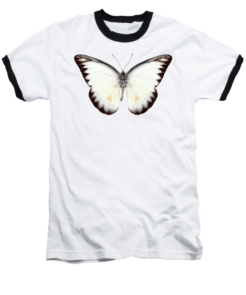 Albatross Baseball T-Shirts