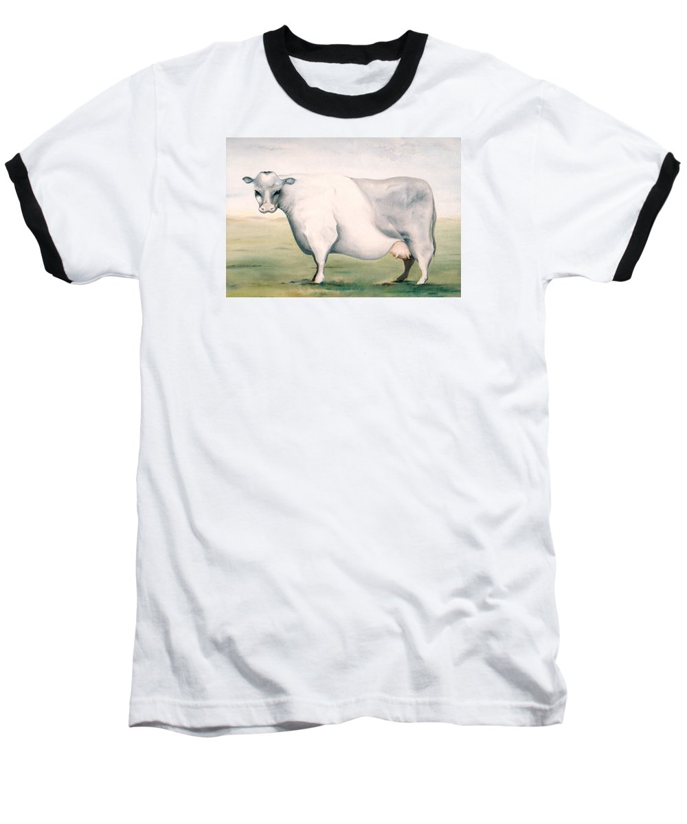 Beef Baseball T-Shirt featuring the painting Beef Holocaust I by Mark Cawood